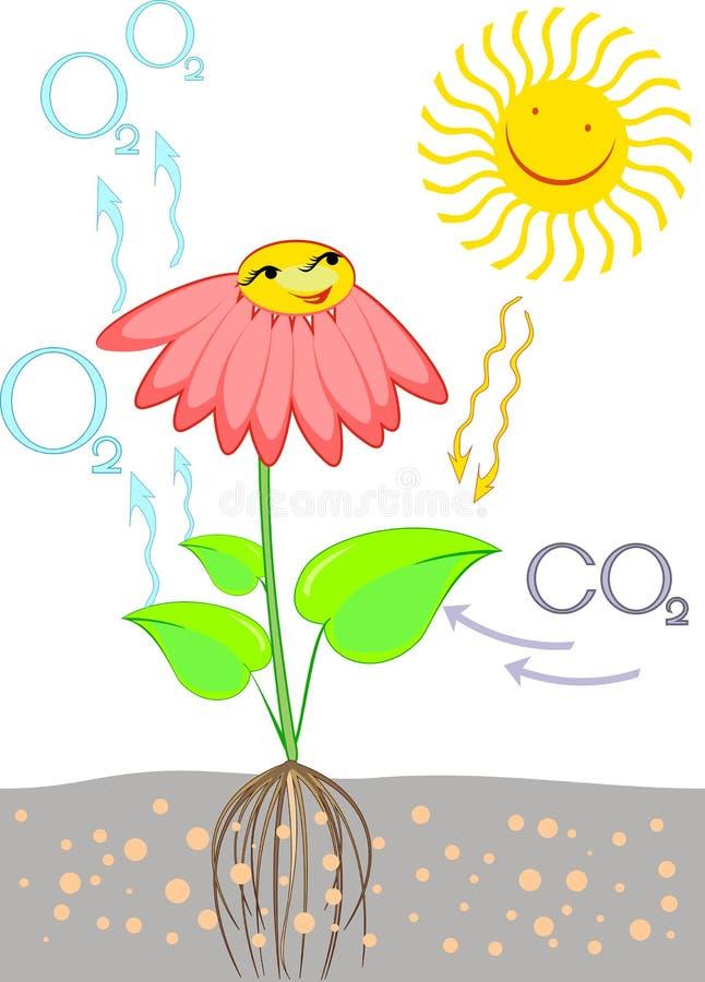 Schema di fotosintesi in pianta royalty illustrazione gratis