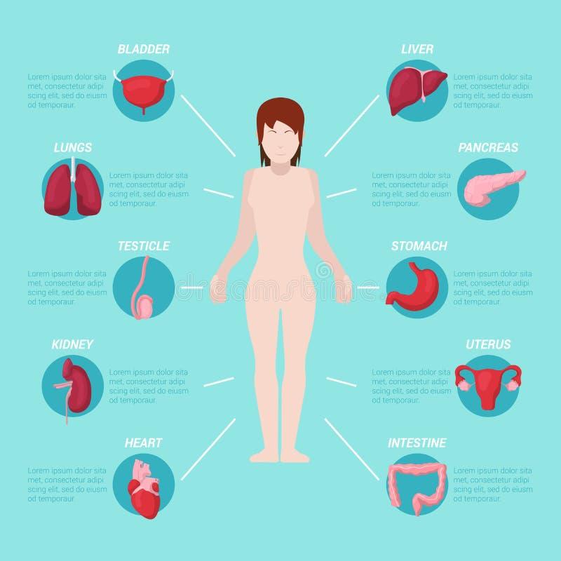 Schema medico di anatomia del corpo umano con gli organi interni illustrazione di stock