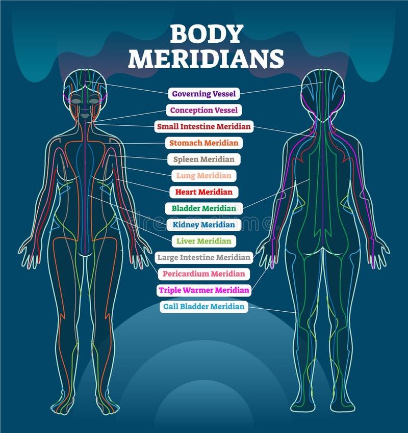 Schema meridiano dell'illustrazione di vettore del sistema del corpo, grafico cinese del diagramma di terapia di agopuntura di en royalty illustrazione gratis