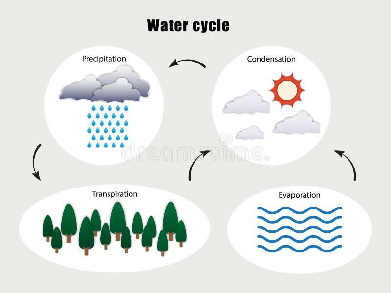 Schemat wektora cyklu wody royalty ilustracja