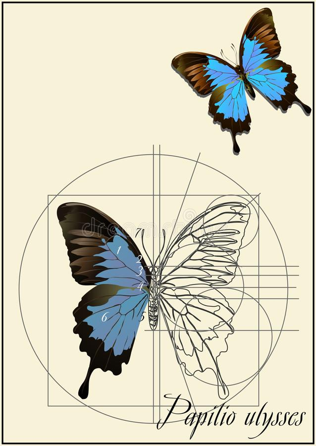 A schematic drawing of a butterfly. The outline of a butterfly on old paper royalty free illustration