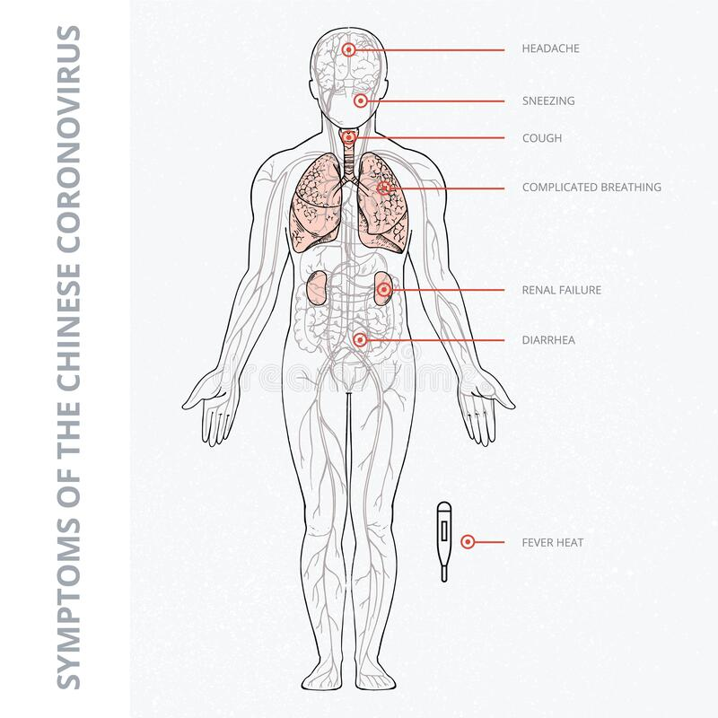 a schematic illustration of the human body with an
