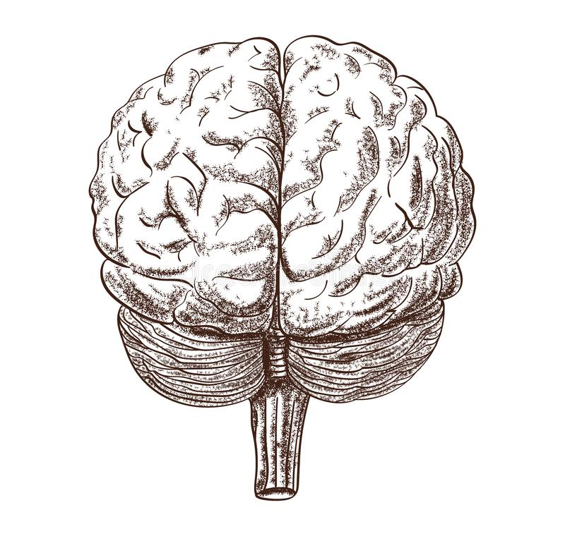 Schematic representation of the human brain on the white background royalty free illustration