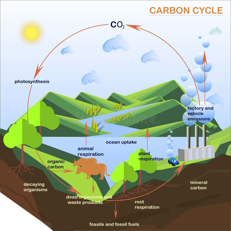 Scheme of the Carbon cycle, flats design royalty free illustration