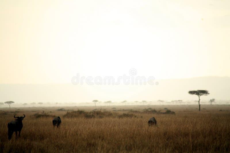 Schemer in Masai Mara royalty-vrije stock fotografie