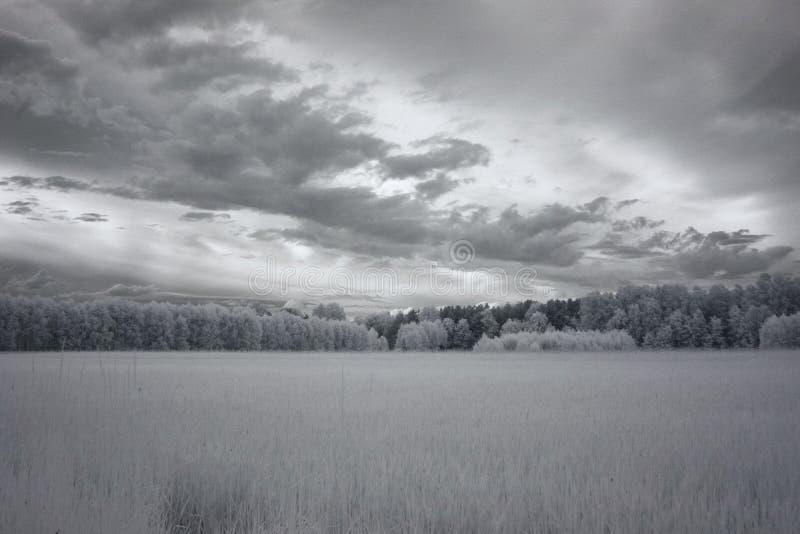 Schemering over de bosfotografie van IRL royalty-vrije stock fotografie