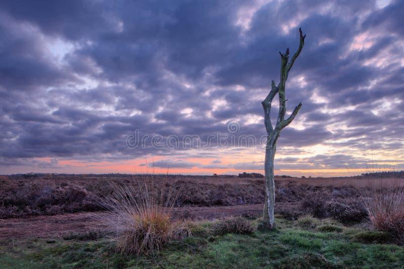Schemeringscène bij een rustige heide, Nederland stock fotografie