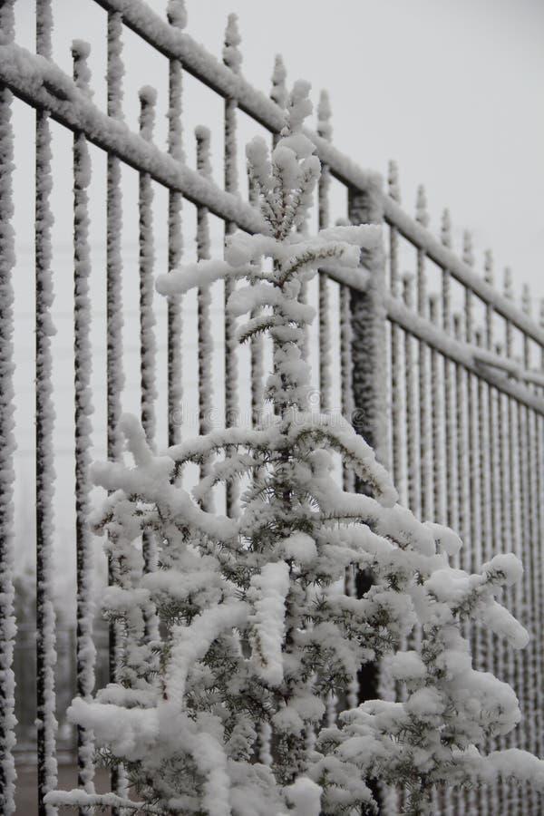 Schermend van metaal, een bont-boom onder sneeuw, ijzige bewolkte dag royalty-vrije stock afbeelding