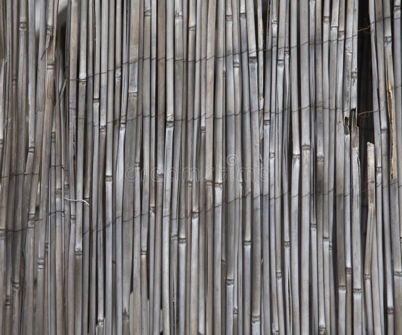 Schermo di bambù fotografia stock libera da diritti