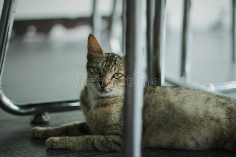 Scherp-eyed kat royalty-vrije stock fotografie