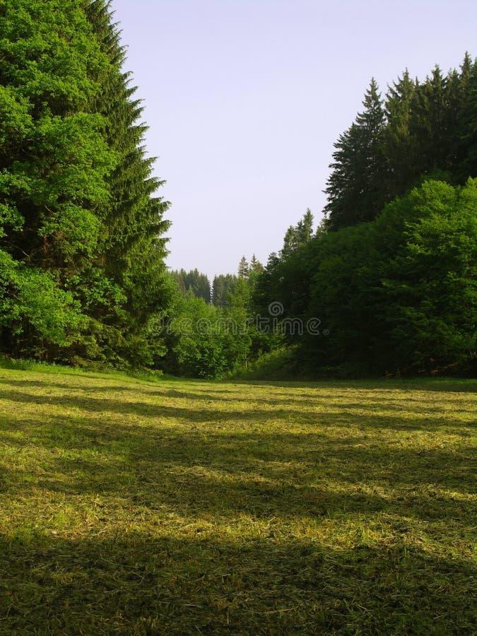 Scherpe hayfield in bos royalty-vrije stock afbeeldingen