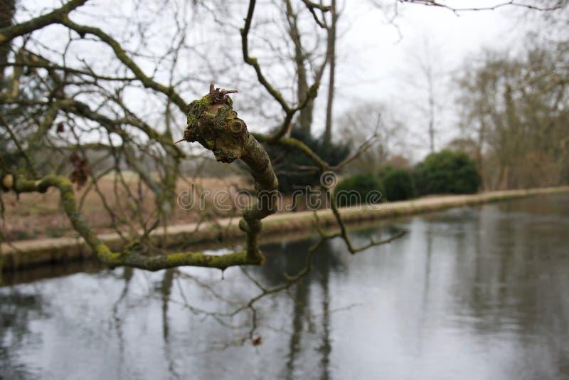 Scherpe nadruk op naakte tak over een rivier - de winterboom, mos & korstmos stock afbeelding