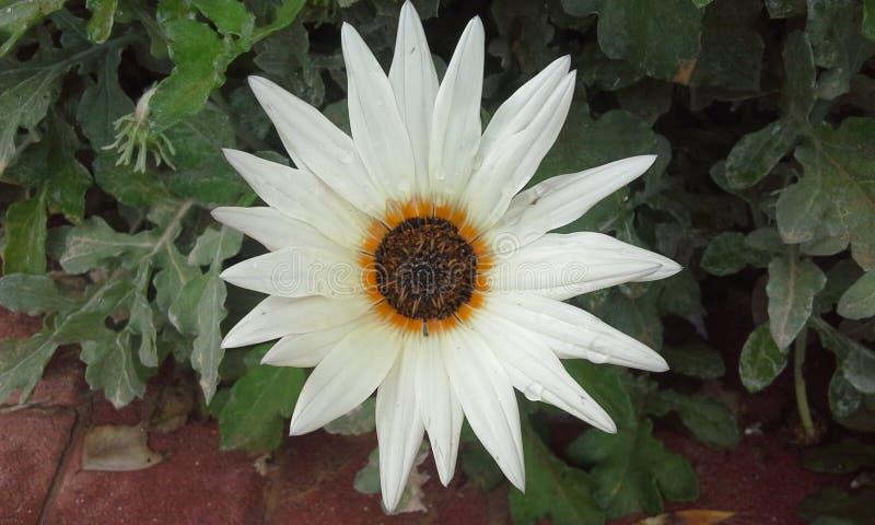 Scherpe witte oranje bloem stock foto's