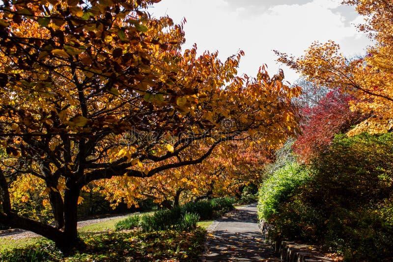 Scherpten de gouden bladeren van de de herfstdaling in sinaasappel, geel en rood in tuin die met het winden van weg plaatsen in s royalty-vrije stock foto's