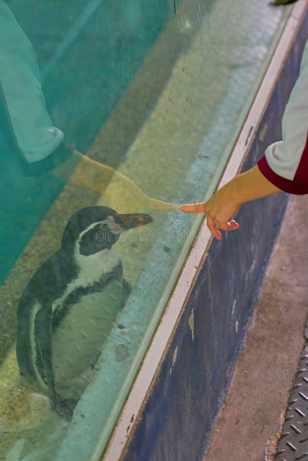 Scherzi il dito della mamma del punto della mano a vetro in cui supporto del pinguino dentro fotografia stock