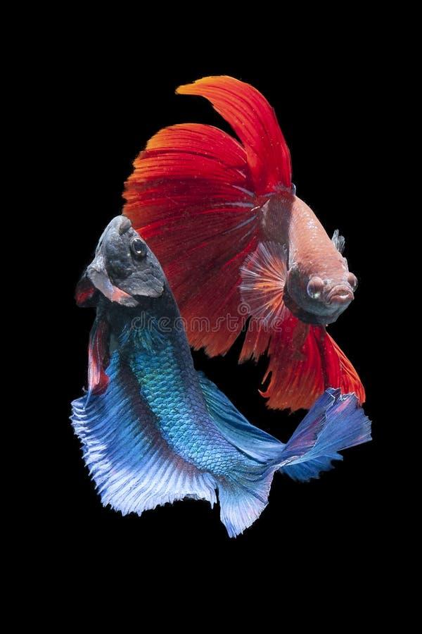 Scherzo del pesce fotografia stock libera da diritti