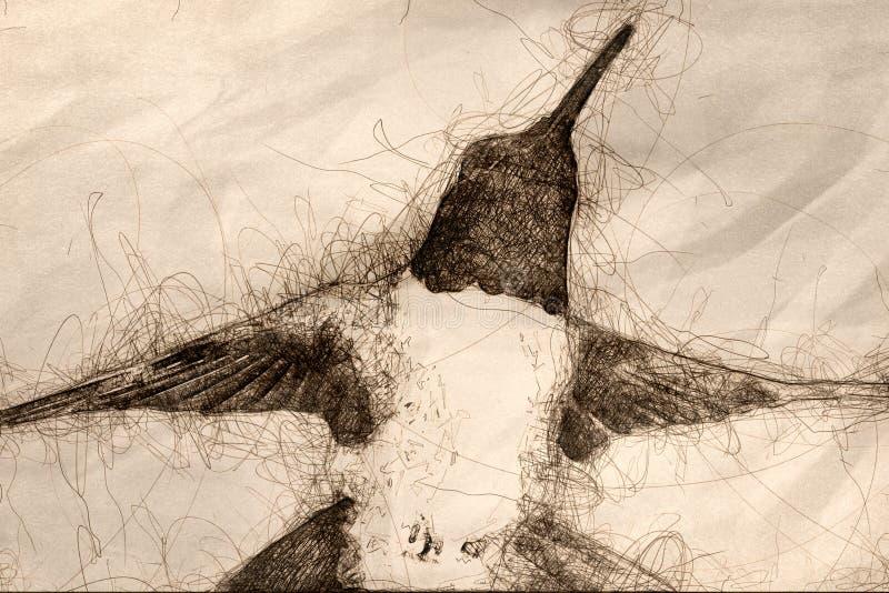 Schets die van Kolibrie zwart-Chinned naar Nectar Among de Bloemen zoeken royalty-vrije illustratie