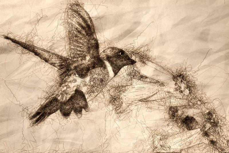 Schets die van Kolibrie zwart-Chinned naar Nectar Among de Bloemen zoeken stock illustratie