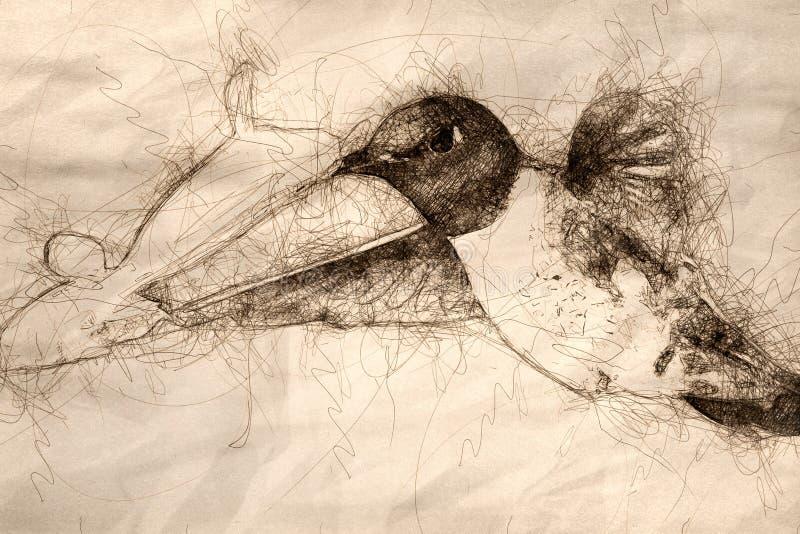 Schets die van Kolibrie zwart-Chinned naar Nectar Among de Bloemen zoeken stock foto's