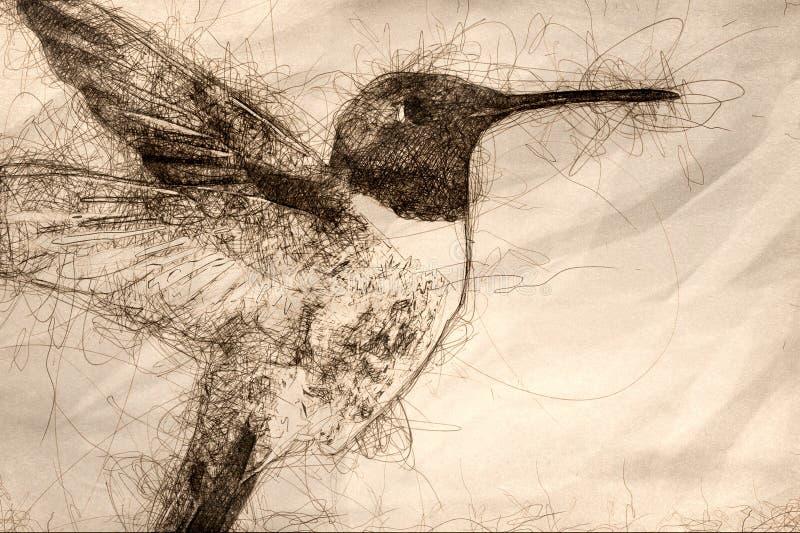 Schets die van Kolibrie zwart-Chinned naar Nectar in de Tuin zoeken stock illustratie