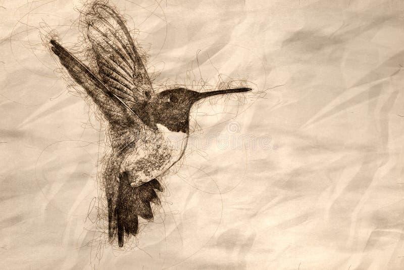 Schets die van Kolibrie zwart-Chinned naar Nectar in de Tuin zoeken stock afbeelding