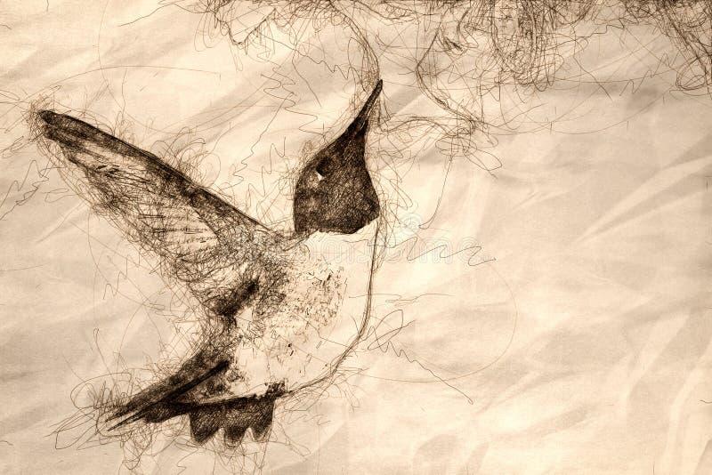 Schets die van Kolibrie zwart-Chinned naar Nectar Among de Witte Bloemen zoeken stock illustratie