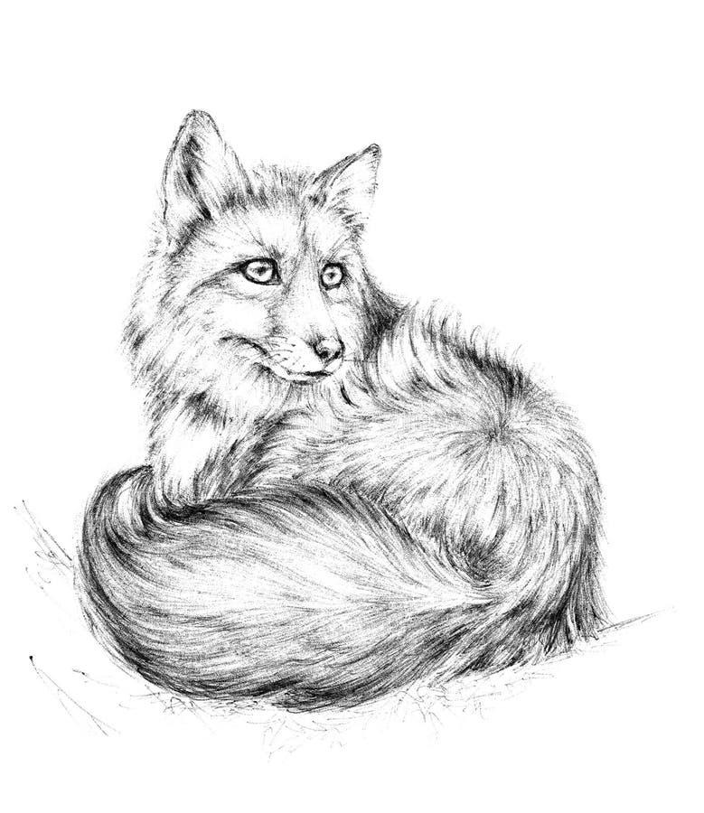 Schets een vos, zwart-witte tekening royalty-vrije illustratie