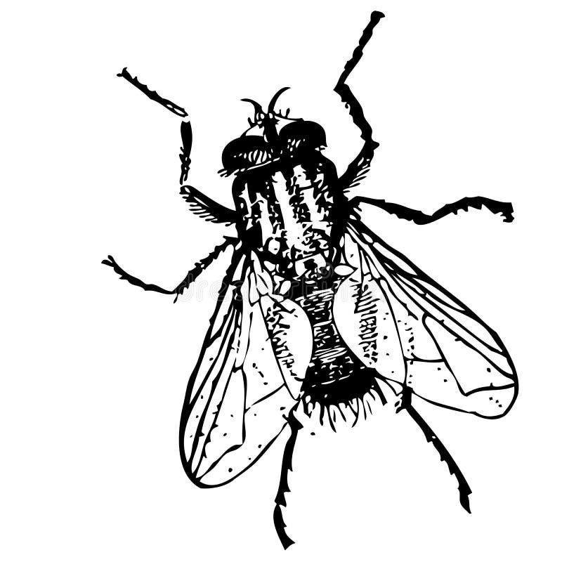 Schets - insectvlieg vector illustratie