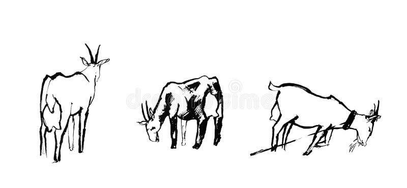 Schets van drie geiten royalty-vrije stock afbeelding