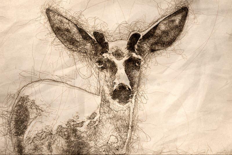 Schets van een Nieuwsgierig Buck Deer Making Direct Eye-Contact vector illustratie