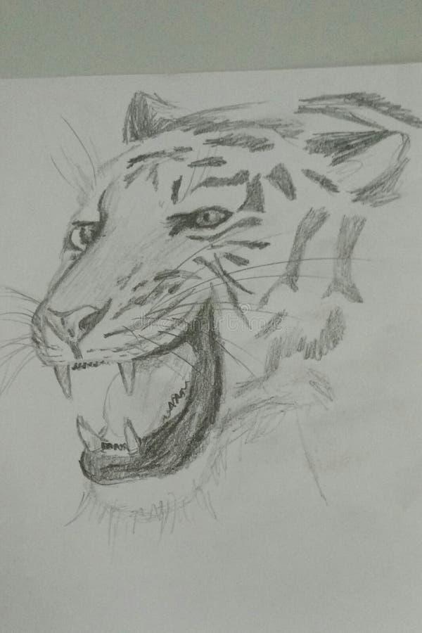 Schets van een tijger royalty-vrije stock afbeelding