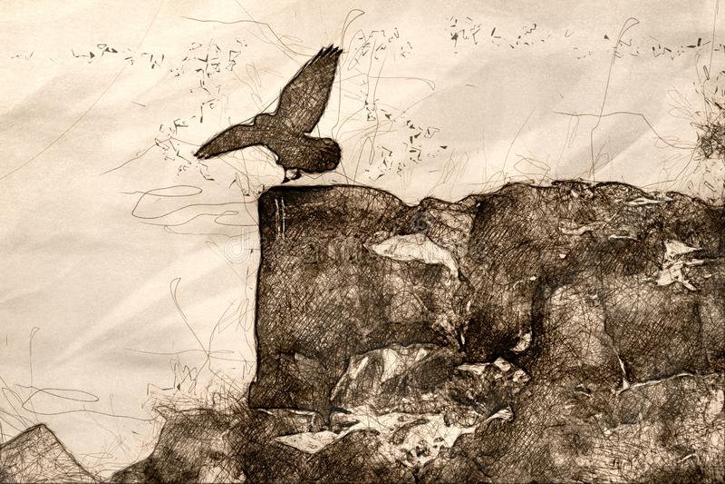 Schets van Gemeenschappelijke Zwarte Raven Landing op Rocky Canyon Ledge royalty-vrije illustratie