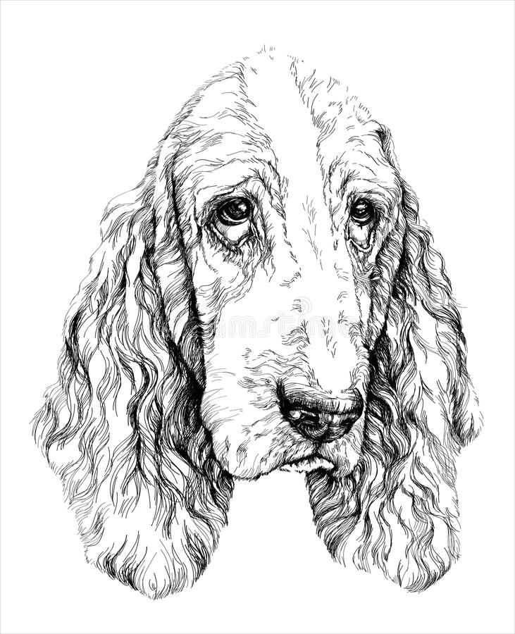 Schets van grappige Basset Hound-hond Vector illustratie stock illustratie