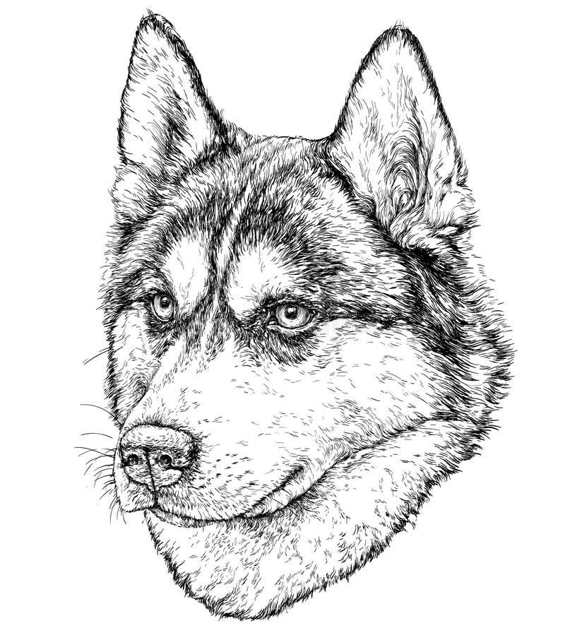 Schets van Husky Dog stock illustratie