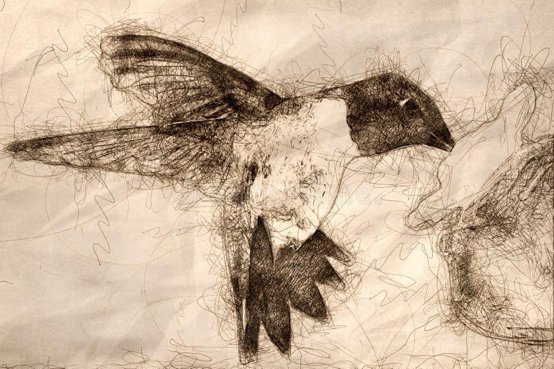 Schets van Kolibrie zwart-Chinned die bij de Voeder voor een Maaltijd aankomen royalty-vrije illustratie