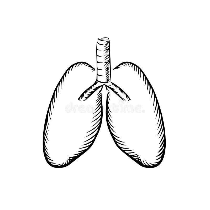 Schets van menselijke longen met trachee vector illustratie