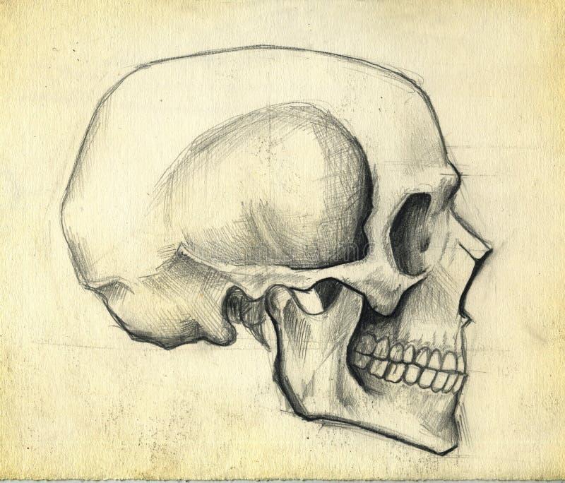 Schets van schedel royalty-vrije illustratie