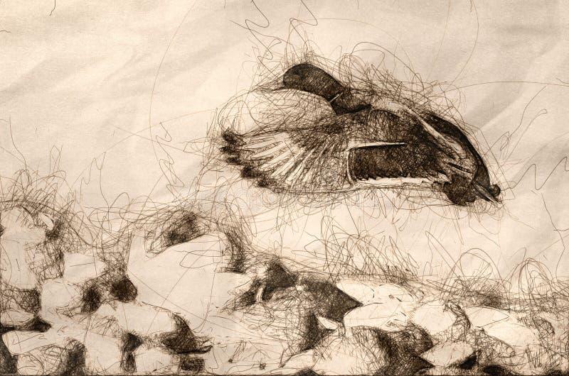 Schets van Wilde eend Duck Taking aan Vlucht van Rocky River Shore stock afbeeldingen