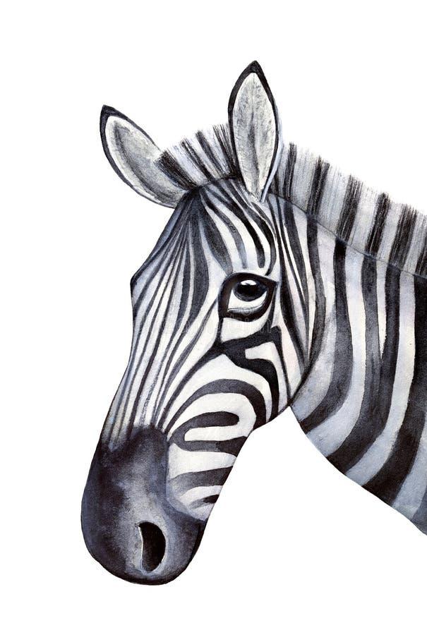 Schetsmatig portret van jonge zebra royalty-vrije illustratie