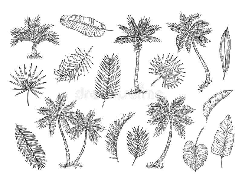 Schetspalm Tropische regenwoudbomen en exotische de tekeningsvector geïsoleerde reeks van de palmbladen uitstekende hand vector illustratie