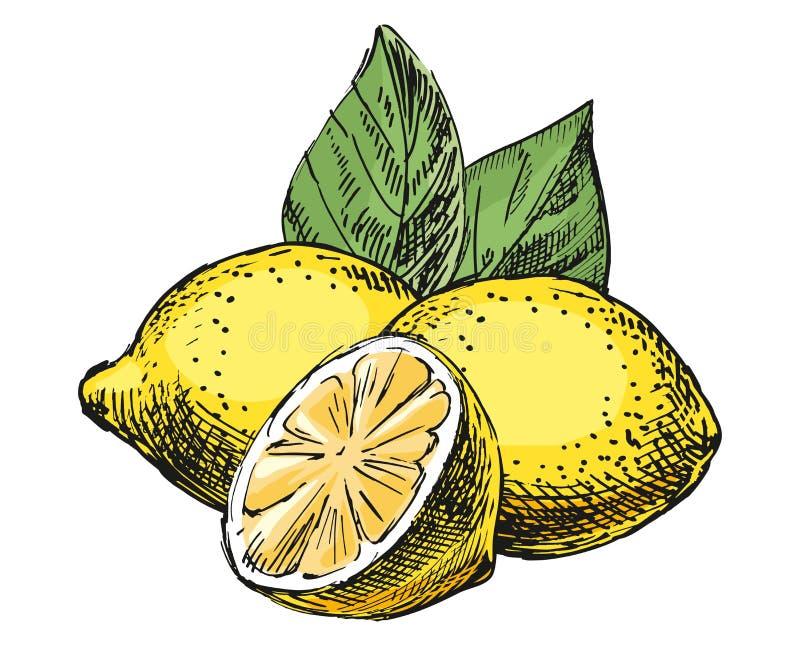 Schetssamenstelling met citroen stock foto