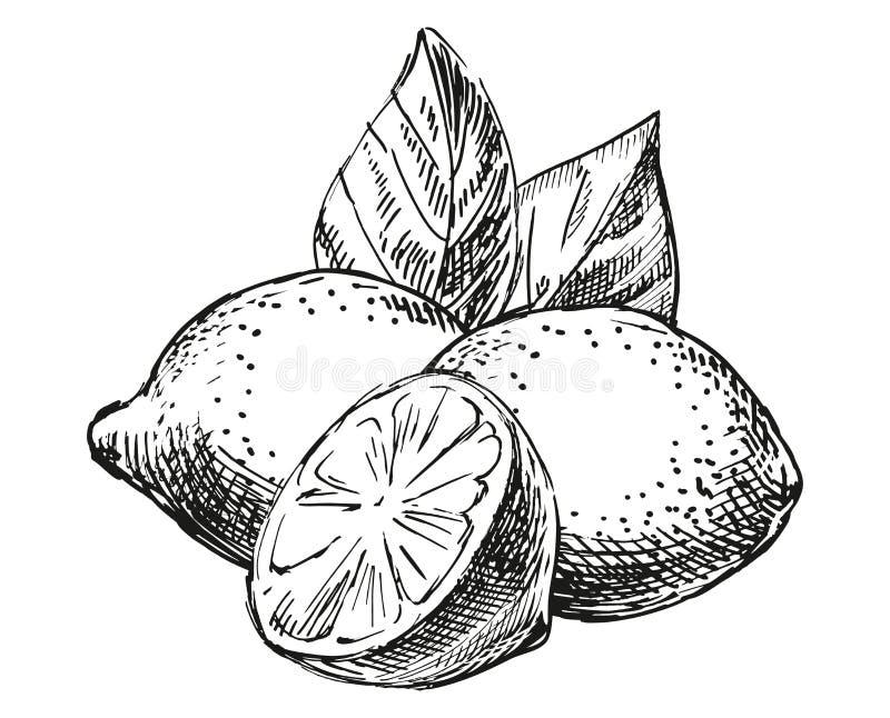 Schetssamenstelling met citroen stock afbeelding
