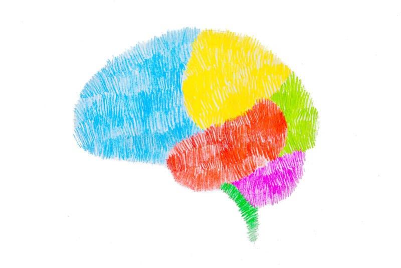 Schetstekening van hersenen grafisch door kleurenpotlood vector illustratie