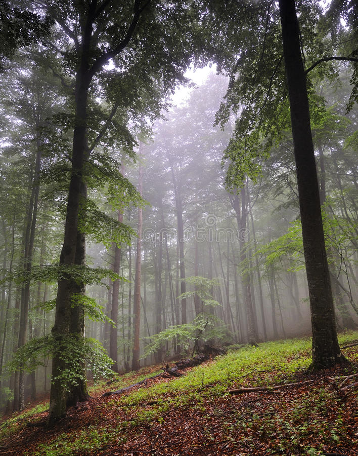 Schiarimento della foresta fotografia stock