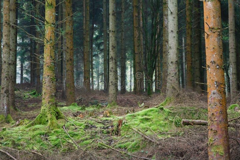 Schiarimento della foresta fotografia stock libera da diritti