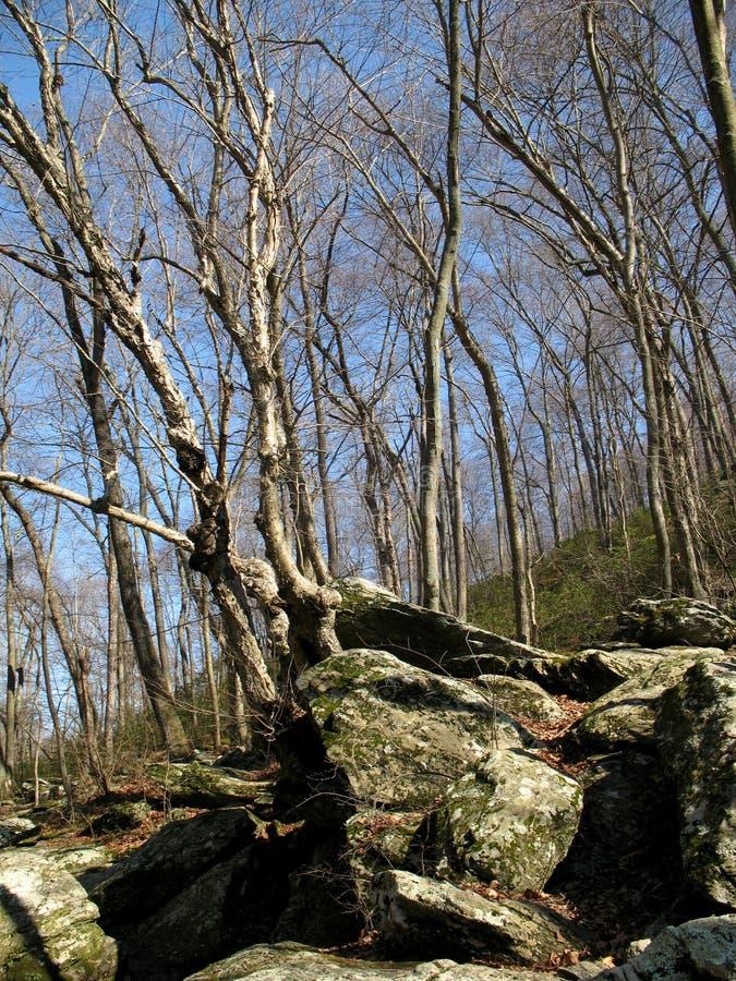 Schießpulver-Wald im März lizenzfreie stockfotos