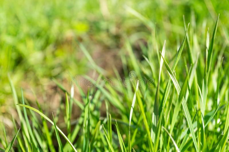 Schießt junges grünes Gras im Park lizenzfreie stockbilder