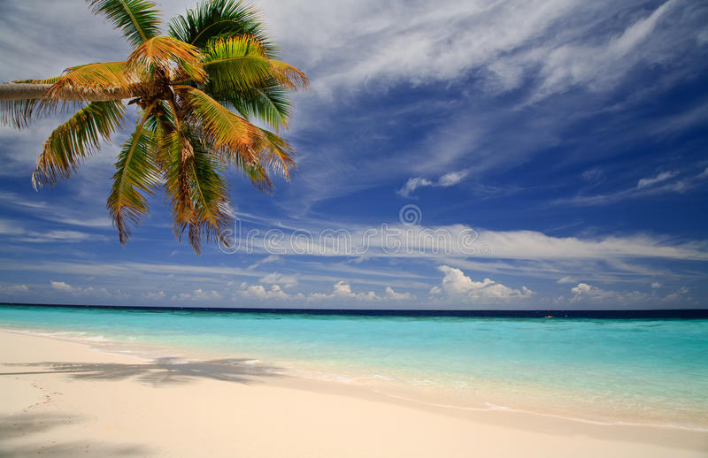 Schieben der Wolken, des Strandes und der Palme stockfoto