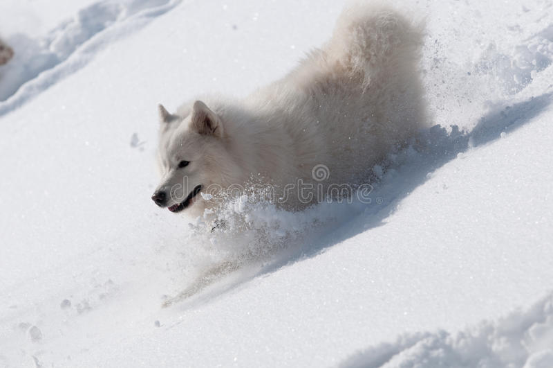 Schieben Sie Downhills In Einem Schnee Stockbilder