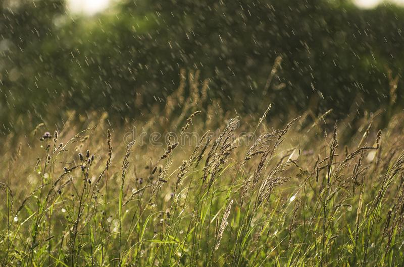 Schief nieselnder Regen über einer Sommerwiese stockbild